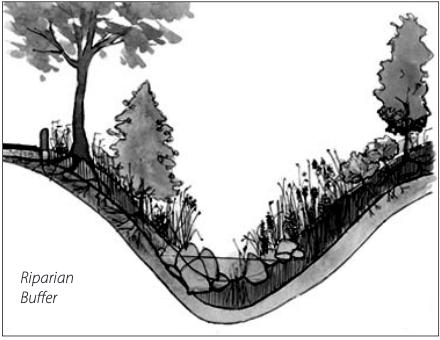 Drawing of a riparian buffer