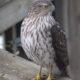 Celebrate Birds:  The Big Sit at Morven Park
