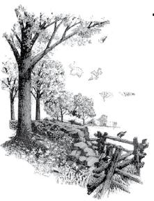 Stone wall drawing