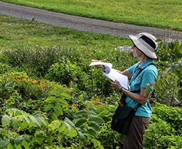 Citizen Science: Butterfly Count