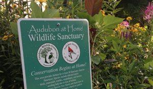 Audubon at Home