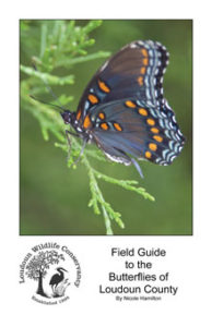butterfly_field_guide_cover