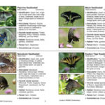 butterfly_field_guide_sample_220