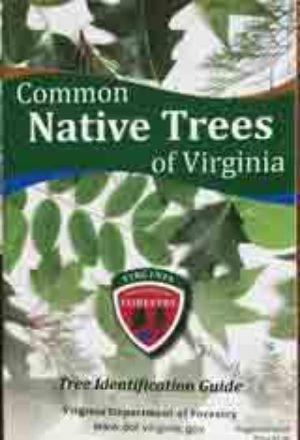 Common Native Trees of Virginia