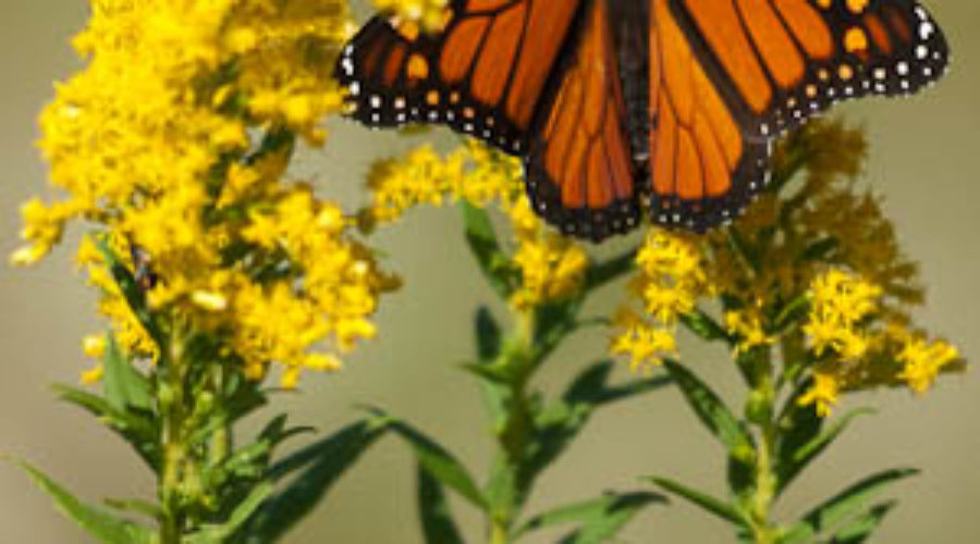 LWC Podcast – Episode 2: A Bit About Butterflies