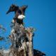 Birding Hot Spots in Loudoun County