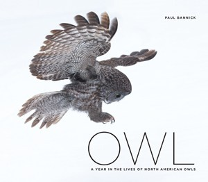 Owl by Paul Bannick