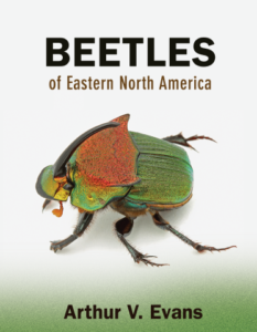 Beetles of Eastern North America book cover