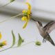 Food for Hummingbirds: Feeders, Flowers, and Bugs