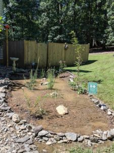 New planting in natural rainwater collection area