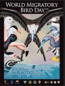 World Migratory Bird Day 2019 art