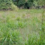 'Slow turnover' meadow, flowering grasses
