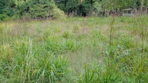 'Slow turnover' meadow, flowering grasses