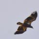 Bald Eagles Seen at Banshee Bird Walk