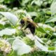 9 Ways You Can Help Bees and Other Pollinators at Home
