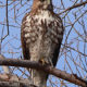 Searching for Birds of Prey: Class and Field Trip