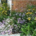 Beautiful native plants in home garden