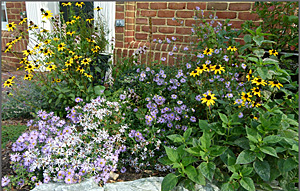 Beautiful native plants in home garden