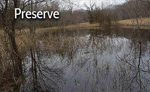 Preserve vernal pools