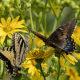 Let's Count Butterflies!