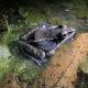 Amphibian Monitoring Training (Virtual)