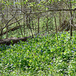 Vegetation at Balls Bluf Park