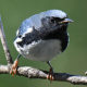 The Birds of Loudoun County:  An Introduction (Virtual)
