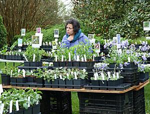 Spring Native Plant Sale