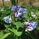 Postponed: Spring Wildflowers
