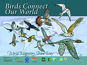 Birds Connect Our World
