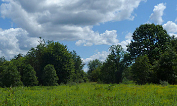 Field and forest at Black Oak