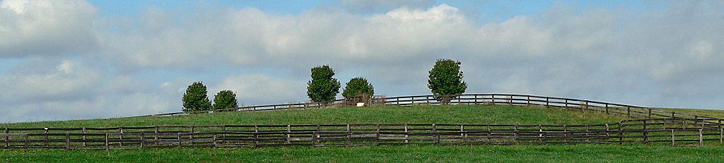 Five trees in rural Loudoun