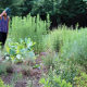 HOA Native Plant Landscape Tour: Broadlands Wildlife Habitat (Virtual)