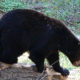 Fascinating Facts about Bears (Virtual)