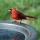 Backyard Bird Identification Guide and Checklist