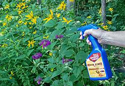 Spraying Pesticide