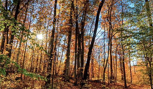 Forest at Blue Ridge Center