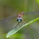 Dragonfly Walk