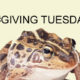 Giving Tuesday is December 1, 2020