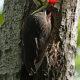Celebrate Birds: JK Black Oak Wildlife Sanctuary