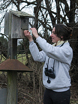Checking a bluebird nesting box