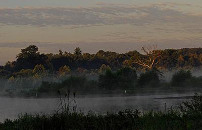 Dulles Wetlands