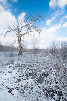 Dulles Wetlands landscape