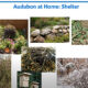 How to Certify Your Property as an AAH Wildlife Sanctuary