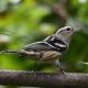 Celebrate Birds:  Birding South Ashburn