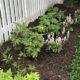 Earth Day for HOAs: Native Plants for the Home Garden (Virtual)