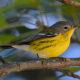 Celebrate Birds, Go Birding: Bird Walks