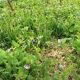 Spring Ephemeral Wildflowers of Loudoun County