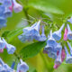 Blooms Outshine Birds on Banshee Reeks Walk