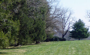 Field with trees and Morven Park